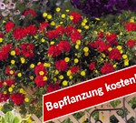 angebot-service_bepflanzung