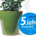 pistazie-kuebel-frostfest